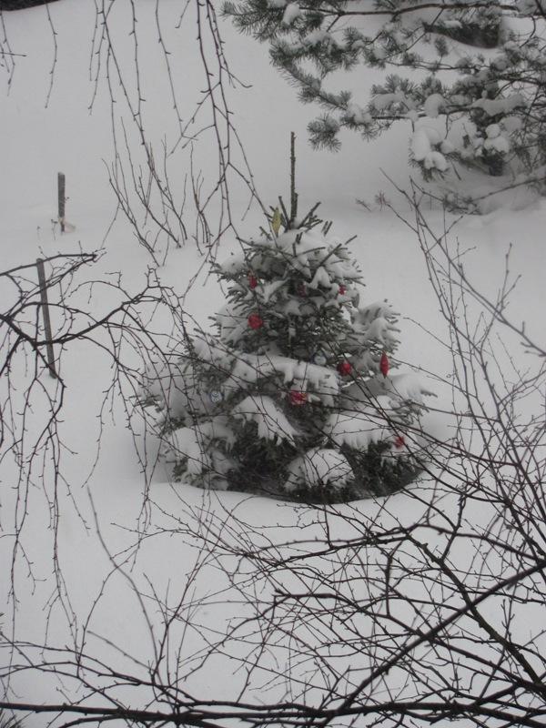 winter2015 008.jpg