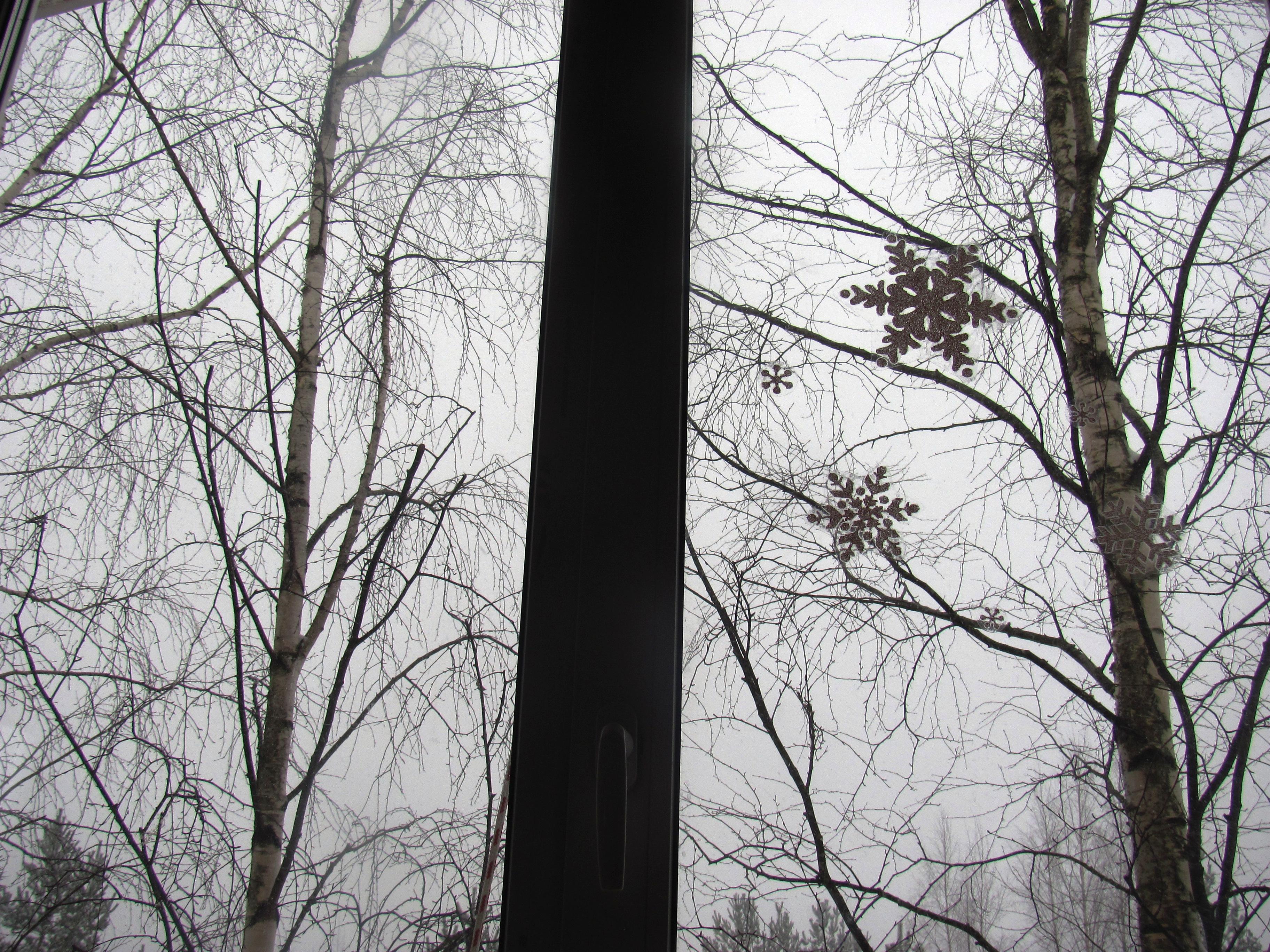 winter2015 011.jpg