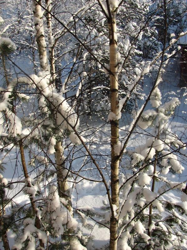 winter2015 021.jpg